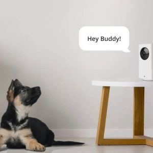 What is the Best Home Security Camera System?
